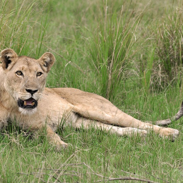 Queen Elizabeth National Park (45)