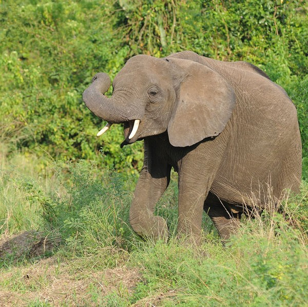 Queen Elizabeth National Park (63)
