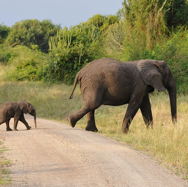 Queen Elizabeth National Park (65)