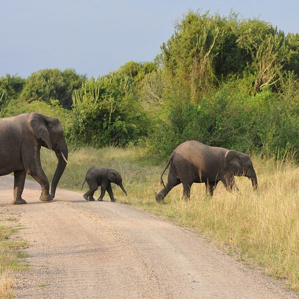 Queen Elizabeth National Park (66)