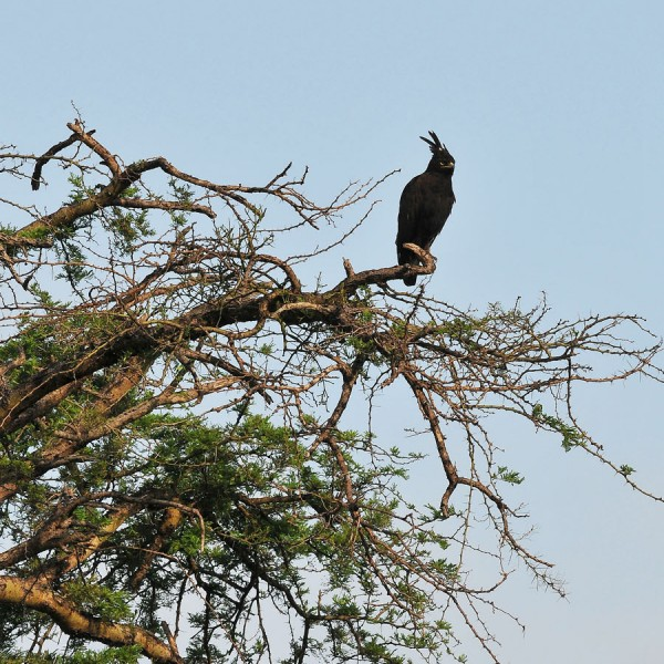 Queen Elizabeth National Park (8)