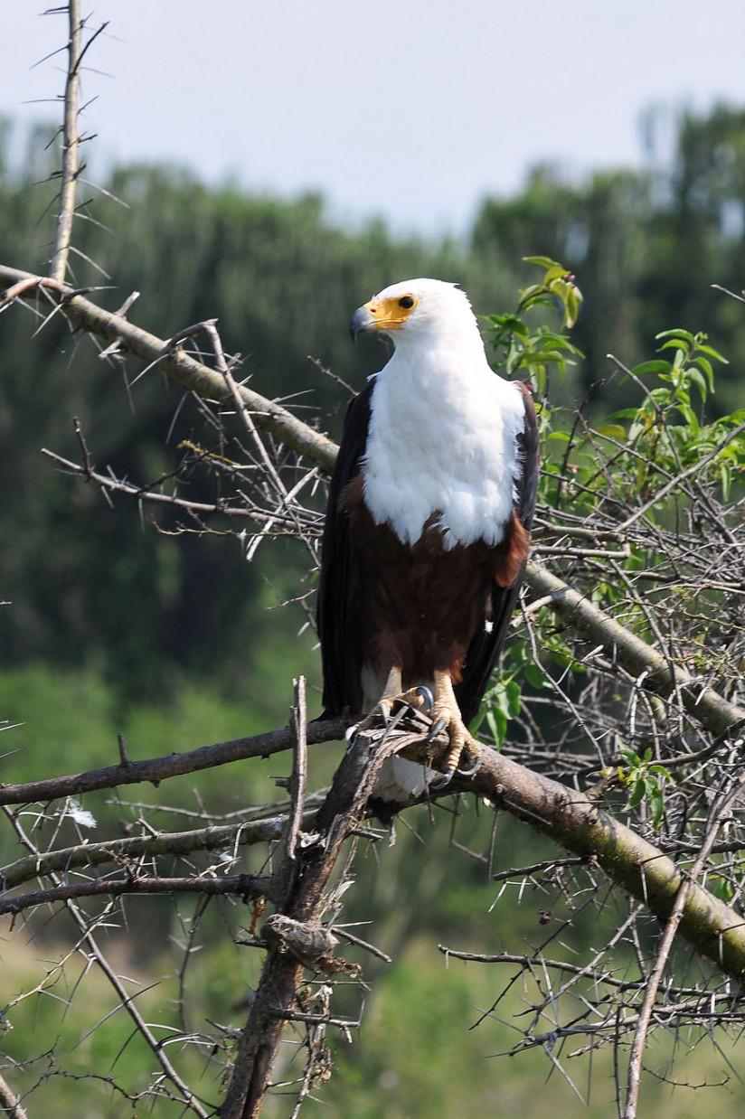 Queen Elizabeth National Park (53)