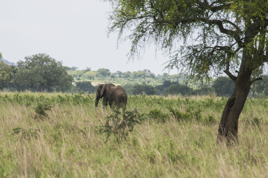 kidepo and karamoja-uganda (14)