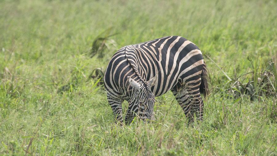 kidepo and karamoja-uganda (29)