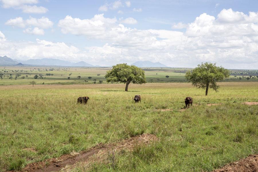 kidepo and karamoja-uganda (3)