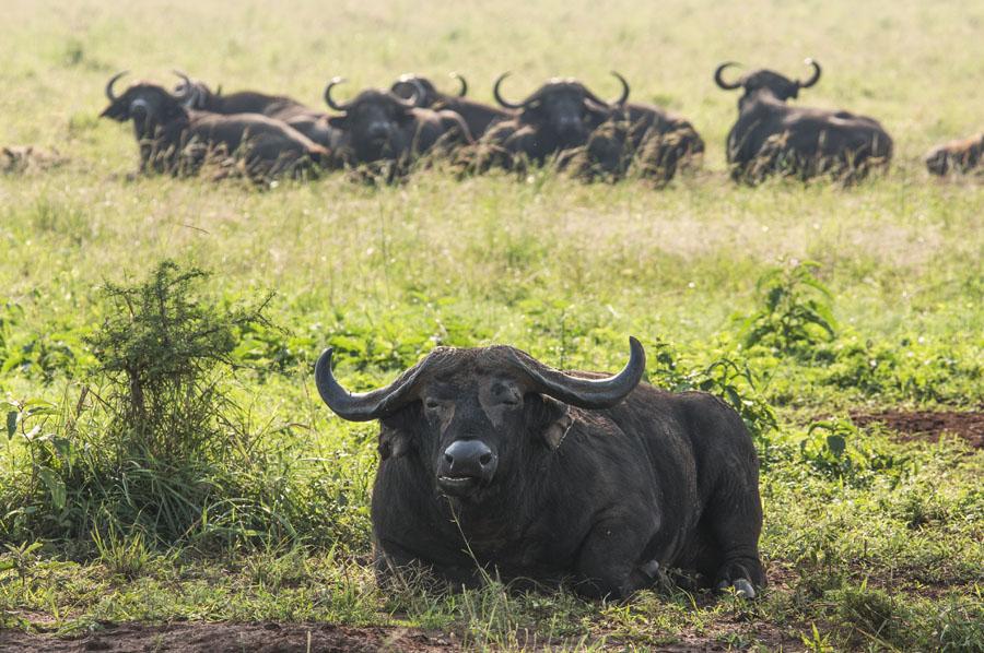 kidepo and karamoja-uganda (53)