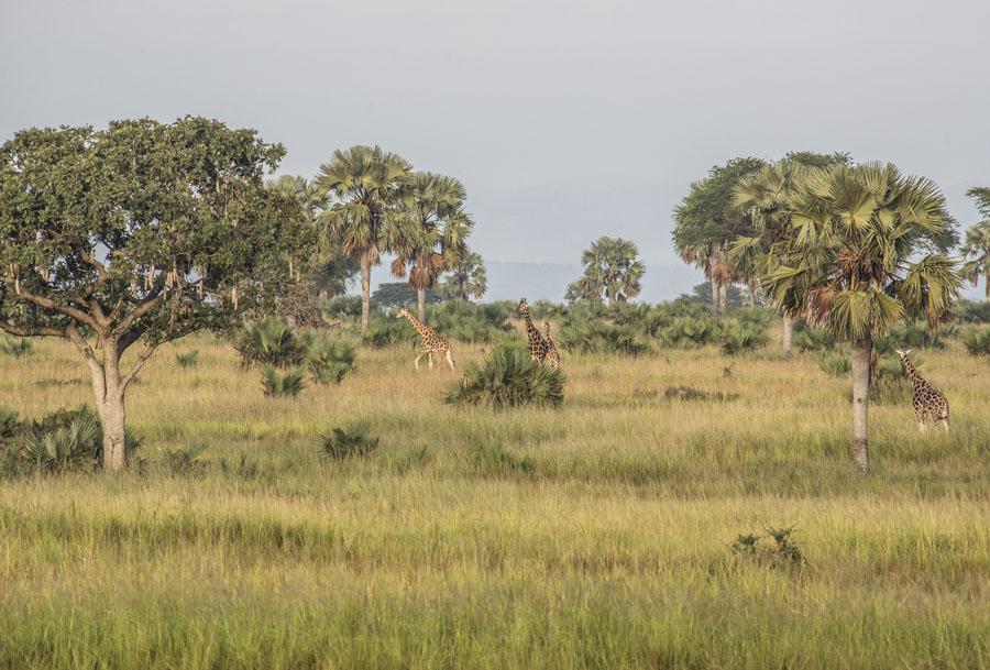 murchison-falls-uganda (1)