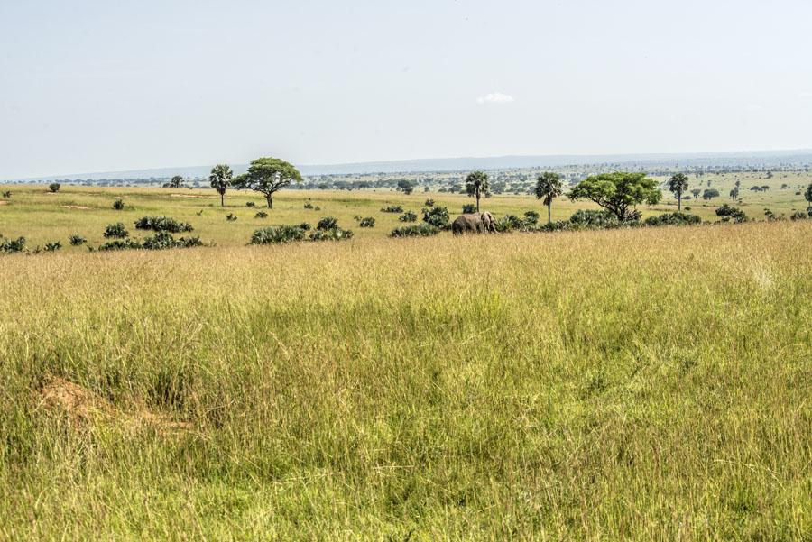 murchison-falls-uganda (100)