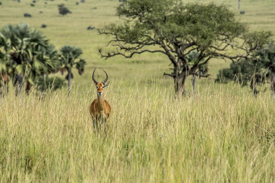 murchison-falls-uganda (107)