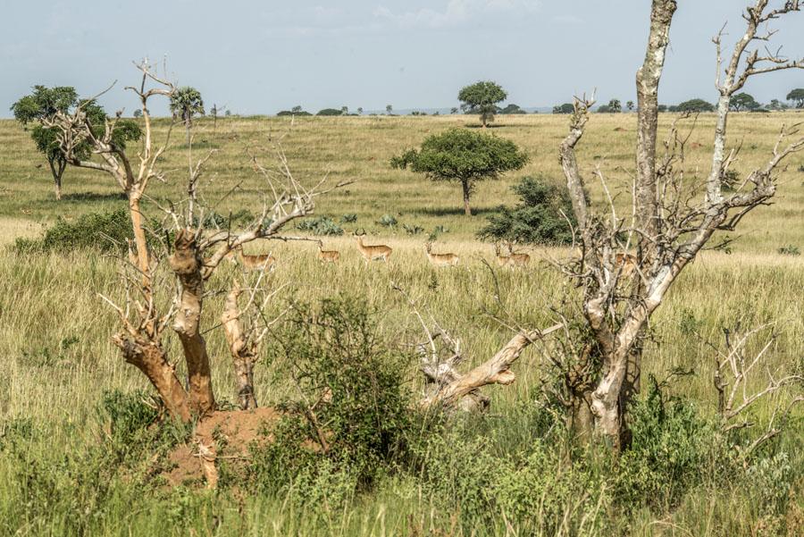 murchison-falls-uganda (109)