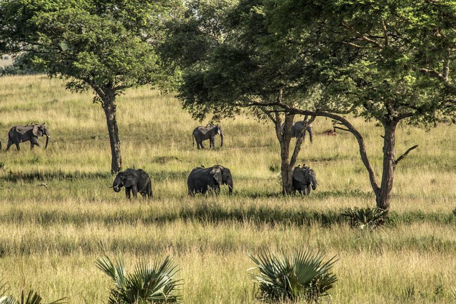 murchison-falls-uganda (112)