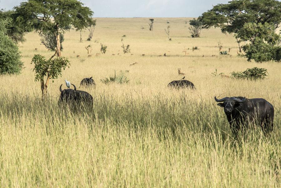 murchison-falls-uganda (113)