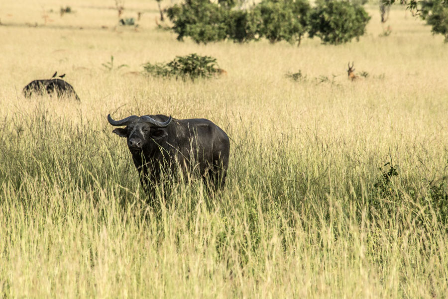 murchison-falls-uganda (114)