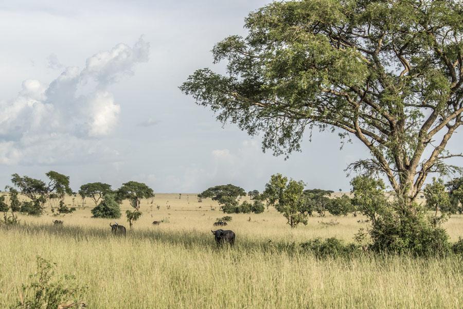 murchison-falls-uganda (115)