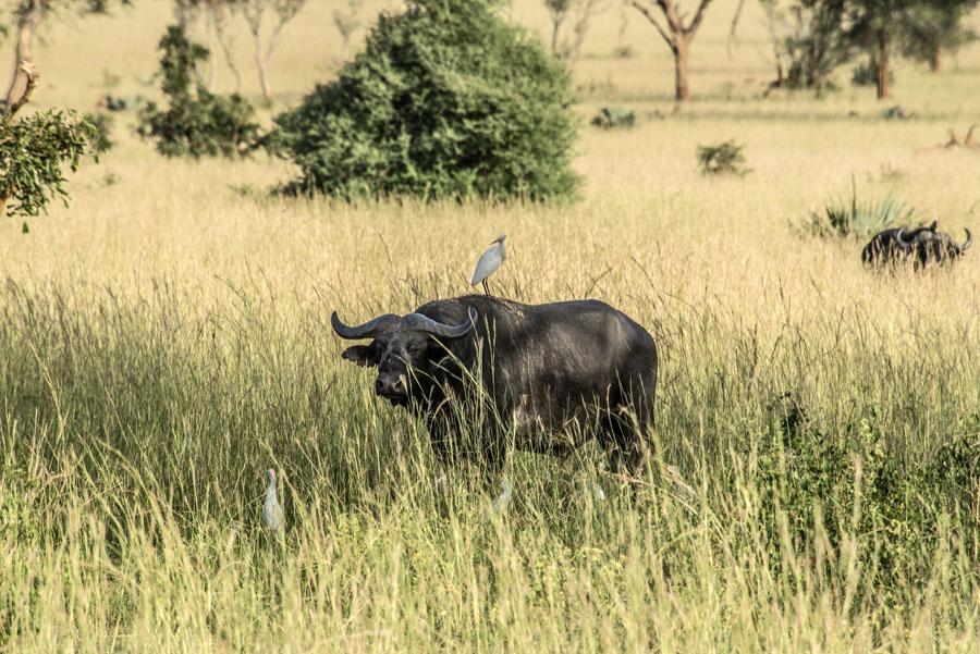 murchison-falls-uganda (116)
