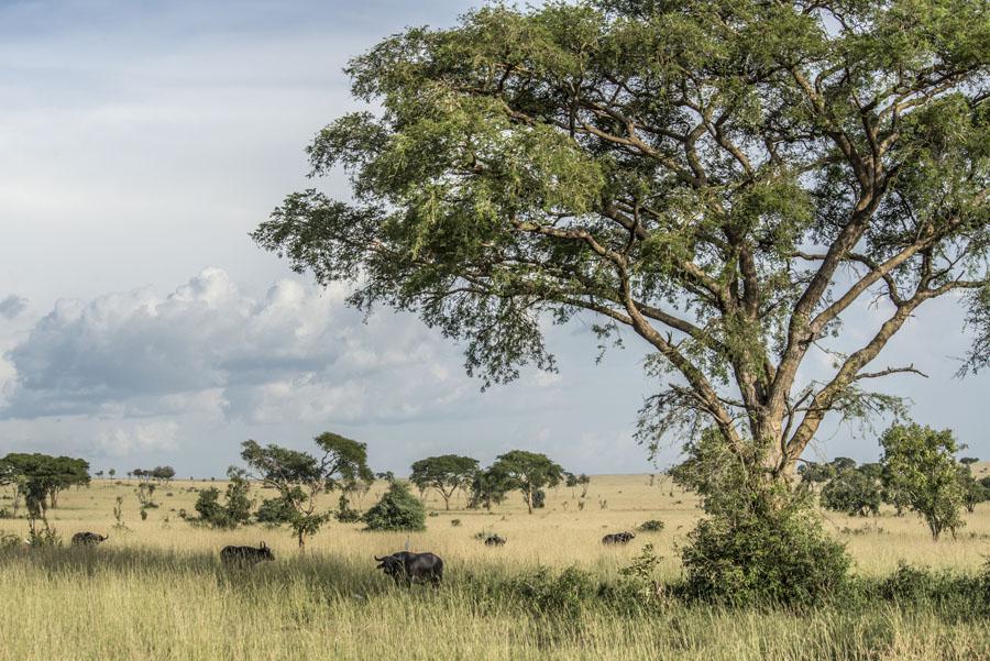 murchison-falls-uganda (117)