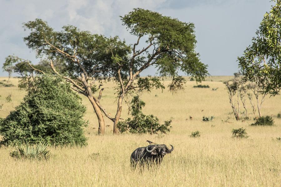 murchison-falls-uganda (119)