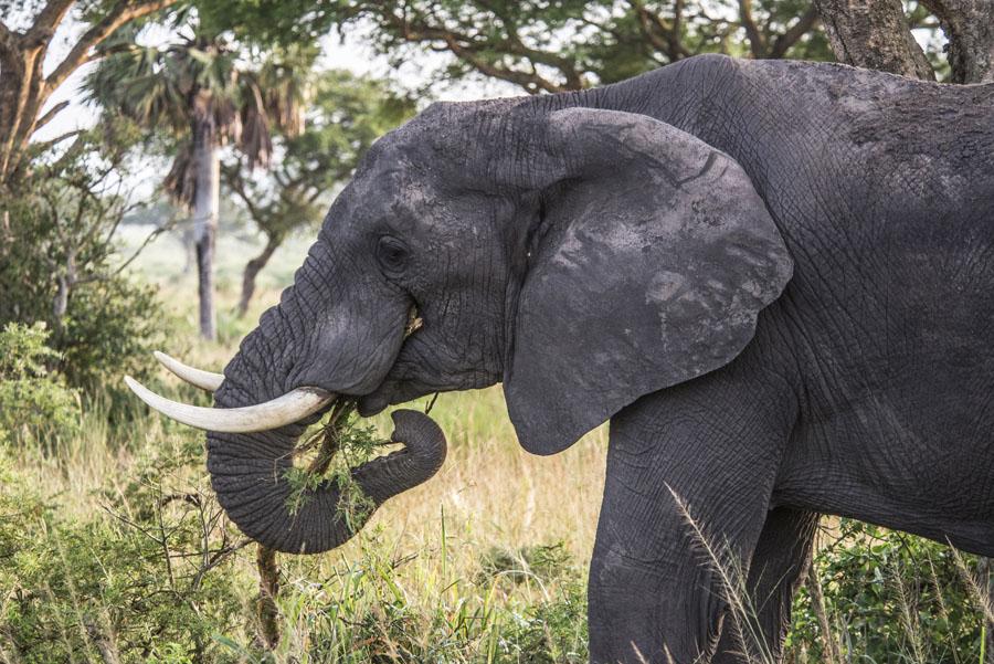 murchison-falls-uganda (120)