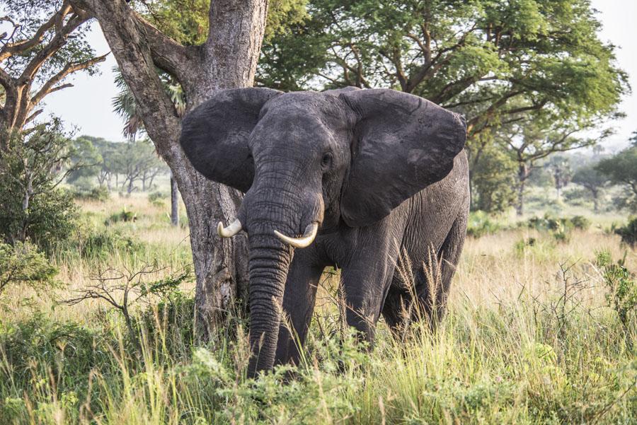 murchison-falls-uganda (122)