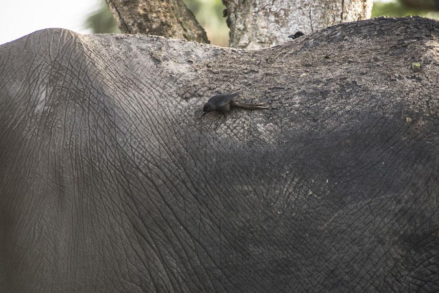 murchison-falls-uganda (123)