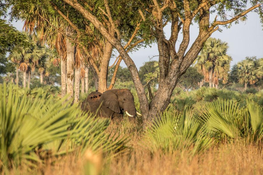 murchison-falls-uganda (124)