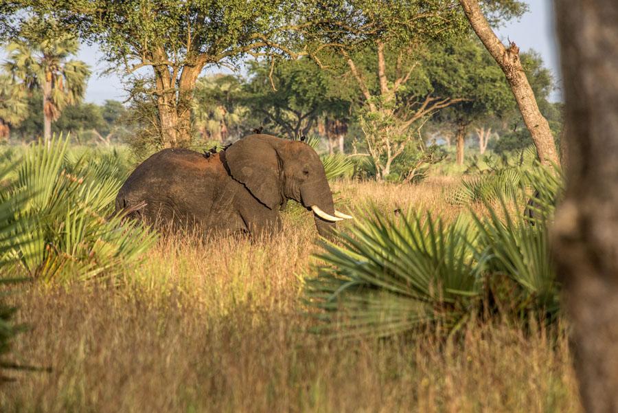 murchison-falls-uganda (125)