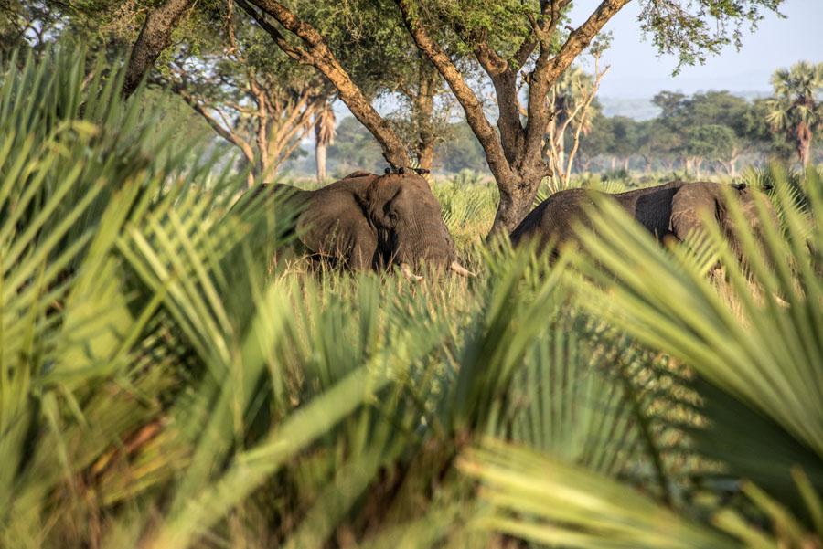 murchison-falls-uganda (126)