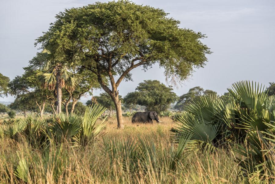 murchison-falls-uganda (127)
