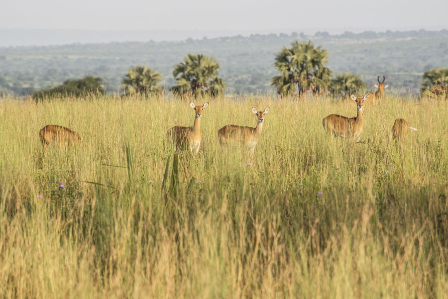 murchison-falls-uganda (130)