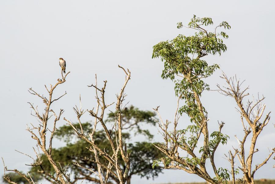 murchison-falls-uganda (132)