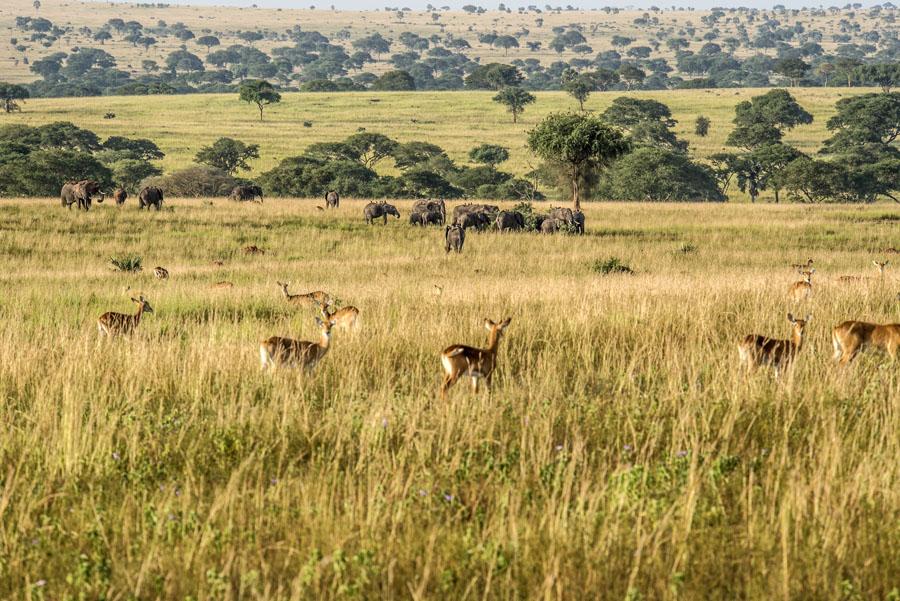 murchison-falls-uganda (135)