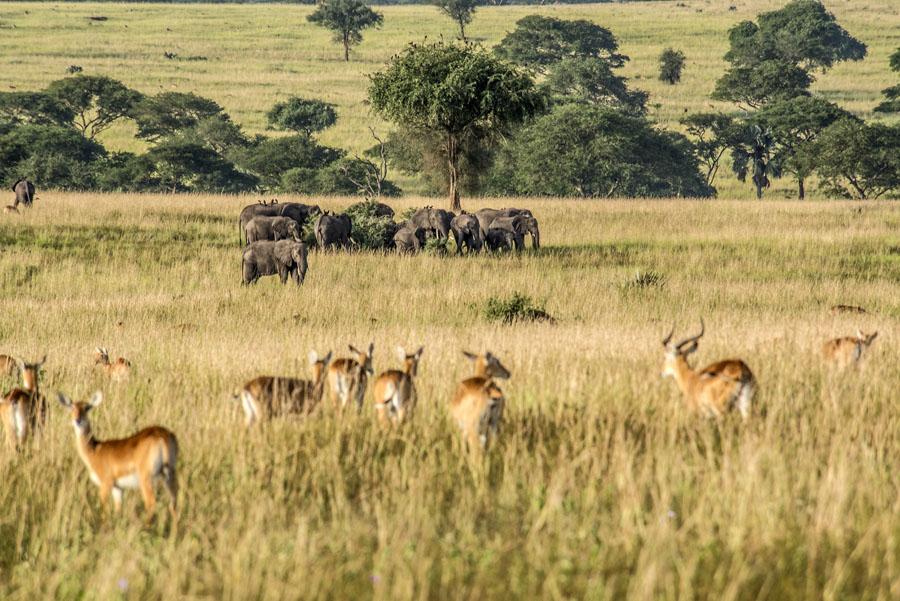 murchison-falls-uganda (136)