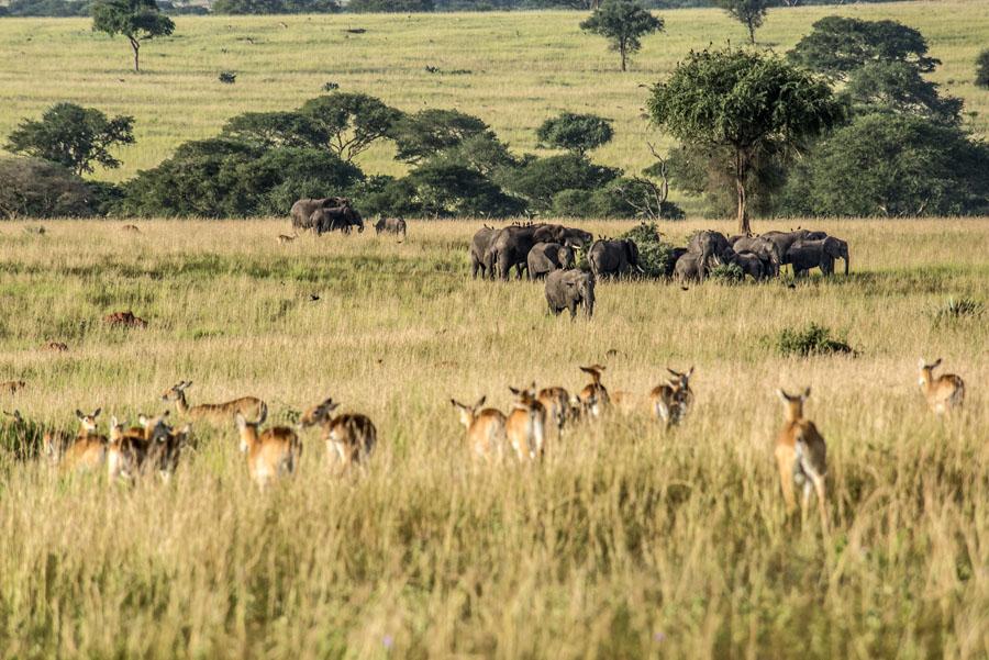 murchison-falls-uganda (138)