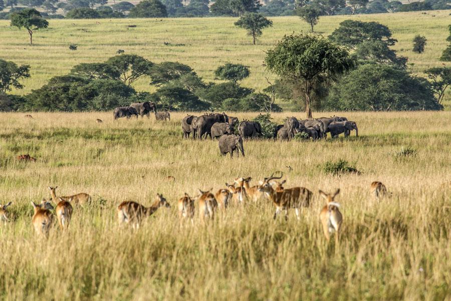 murchison-falls-uganda (139)