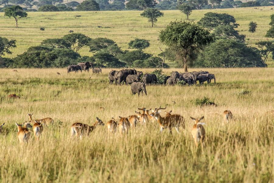 murchison-falls-uganda (140)