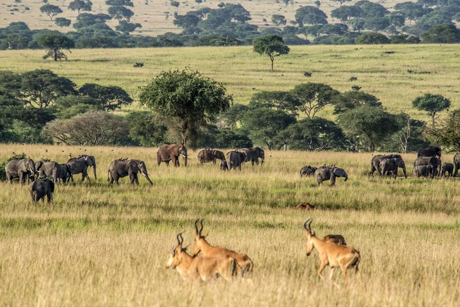 murchison-falls-uganda (141)