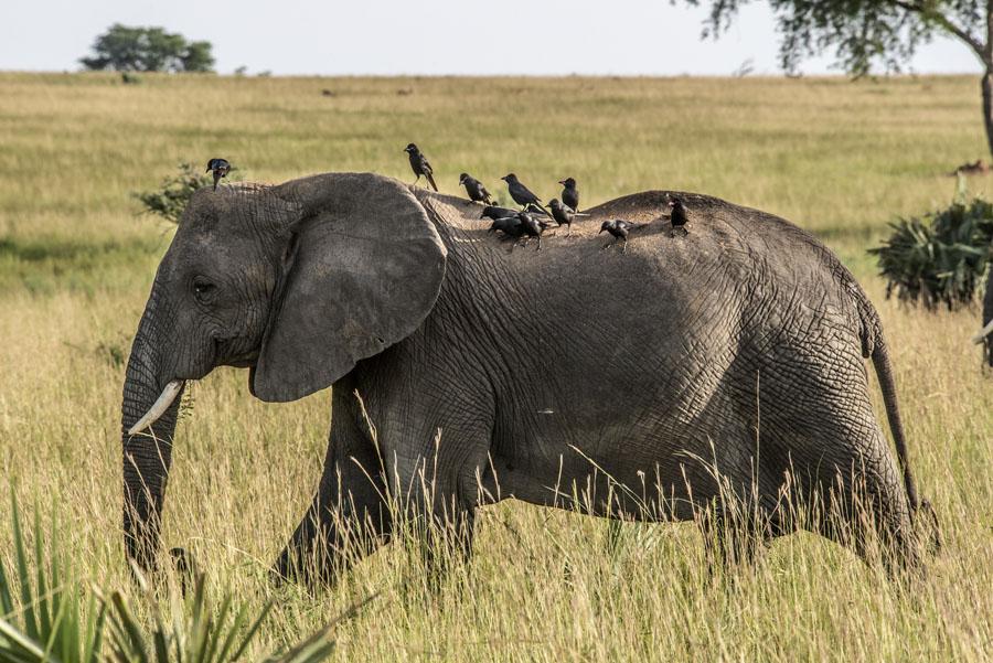murchison-falls-uganda (146)