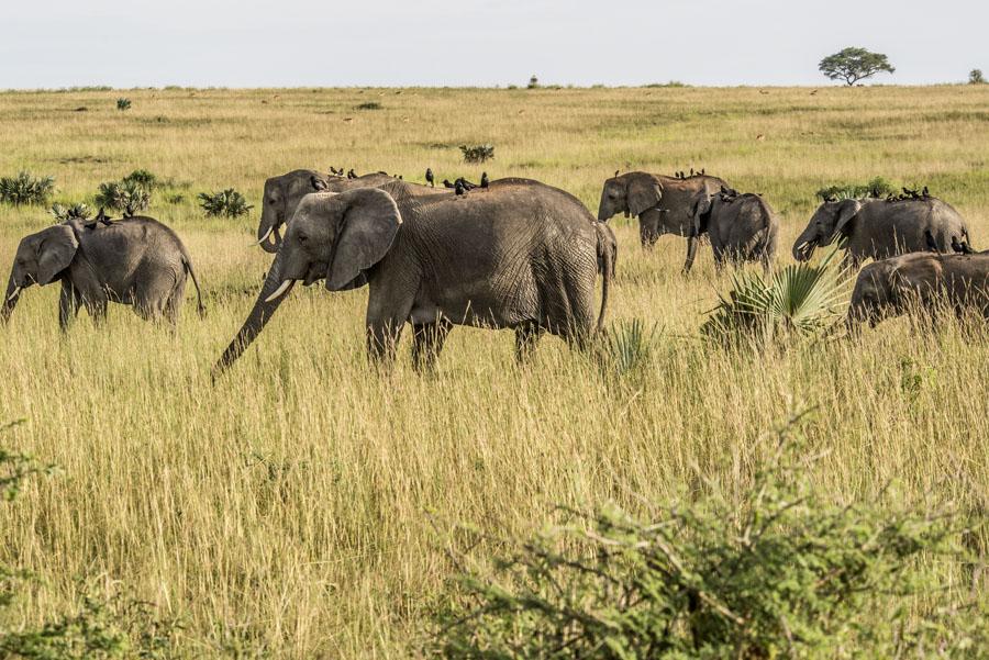 murchison-falls-uganda (149)