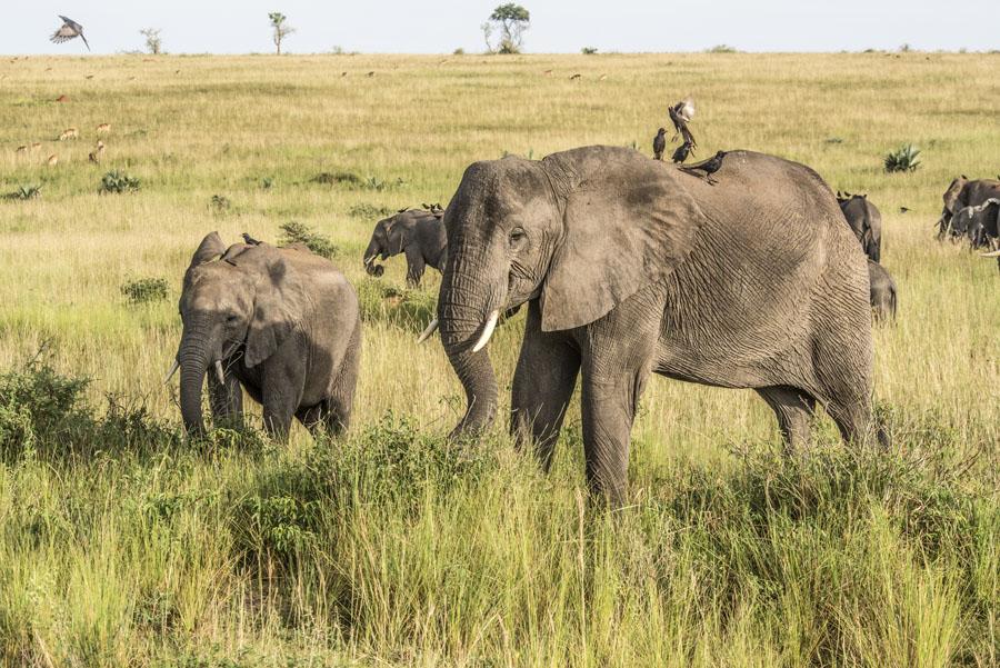 murchison-falls-uganda (152)