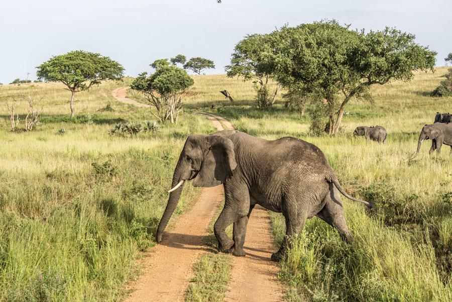 murchison-falls-uganda (154)
