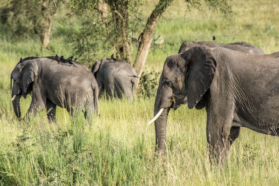murchison-falls-uganda (155)