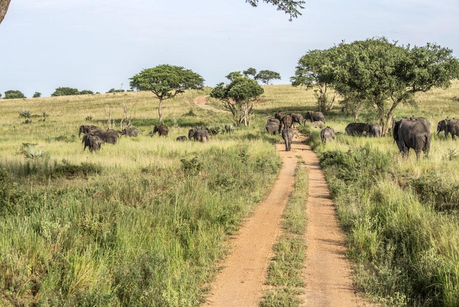murchison-falls-uganda (156)