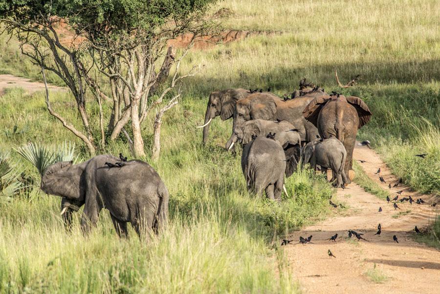 murchison-falls-uganda (157)