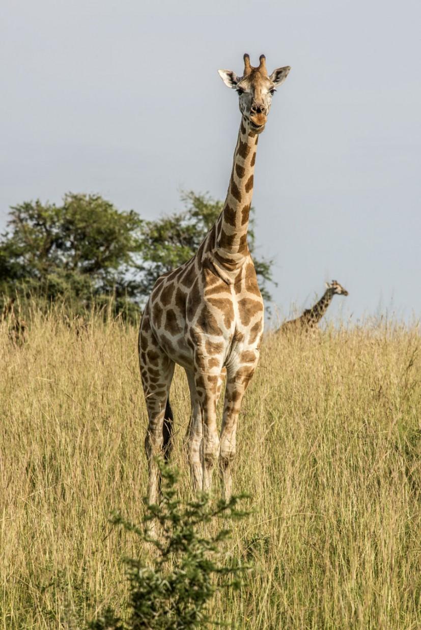 murchison-falls-uganda (163)