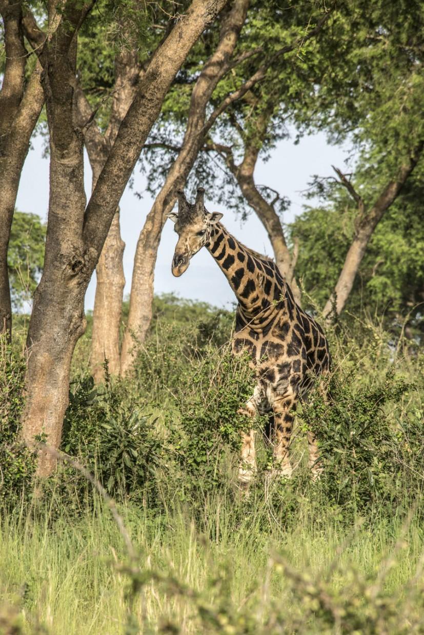 murchison-falls-uganda (165)