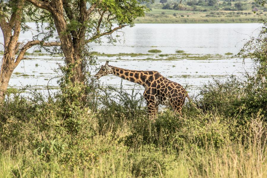 murchison-falls-uganda (168)