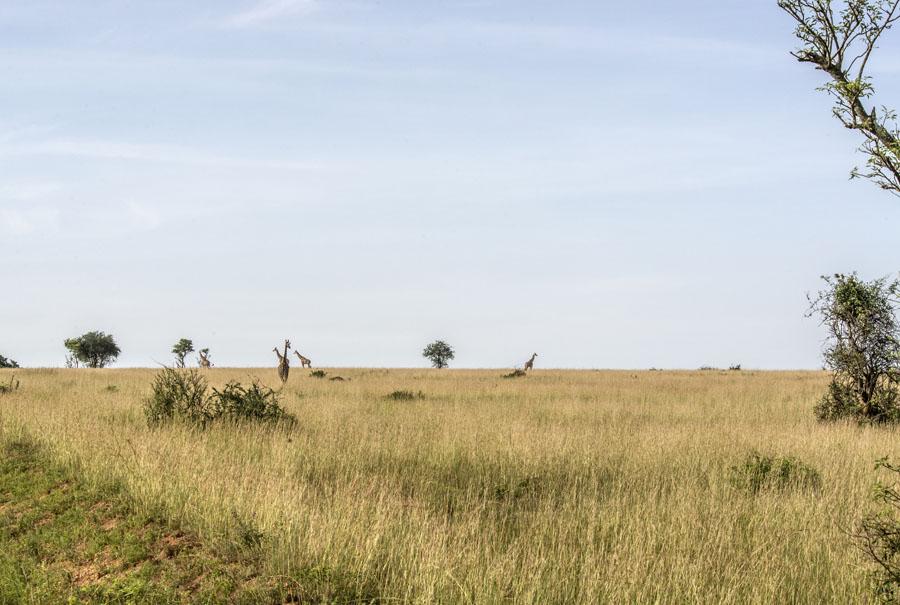 murchison-falls-uganda (169)