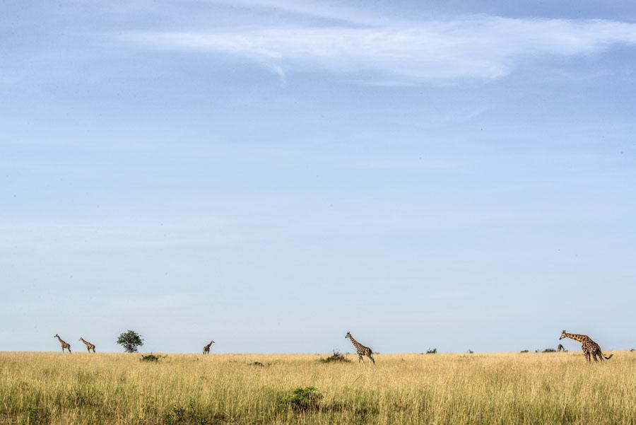 murchison-falls-uganda (172)