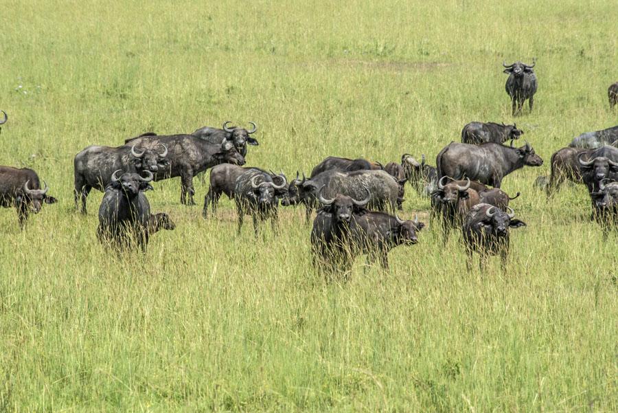 murchison-falls-uganda (202)