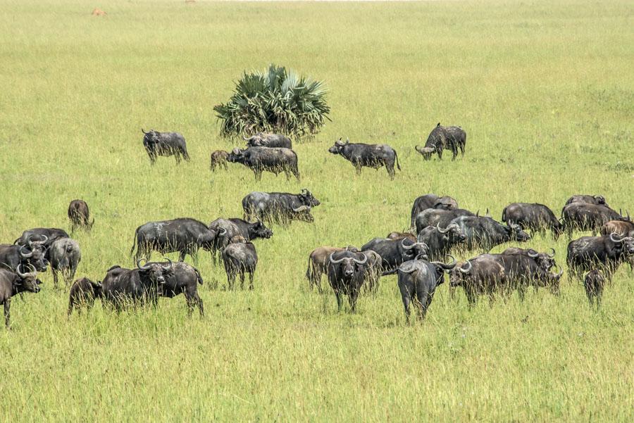 murchison-falls-uganda (204)